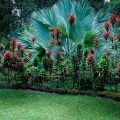 I want to share with you these 10 paradise gardens Hawaiian Tropical Gardens MG 1094 120x120